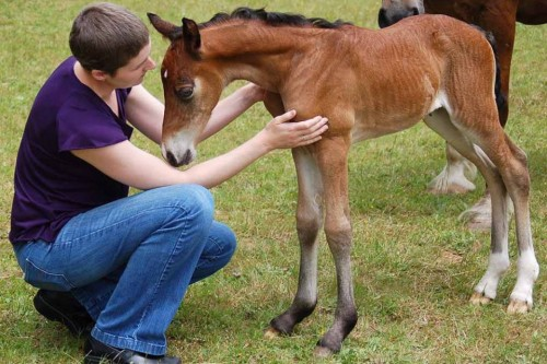 When Alanna met Emi at three days old, the filly greeted her with a whinny.When Alanna met Emi at three days old, the filly greeted her with a whinny.