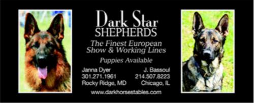 classifieds-european-show-dark-star-sheperds