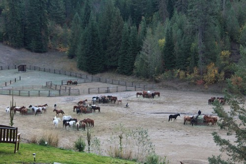 Jan's horse Oreo is easy to spot. Look for the black horse by himself toward the right of the photo. Photo by Anne Joubert