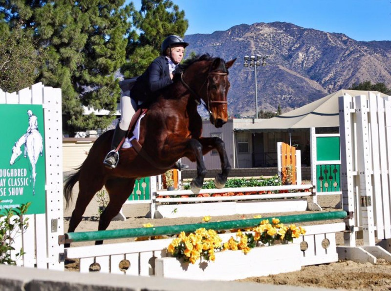 Susan's friend Natalie showing the movie star Seabiscuit, aka Fred, at the Thoroughbred Classic Horse Show. Photo by Joanie Rietkerk