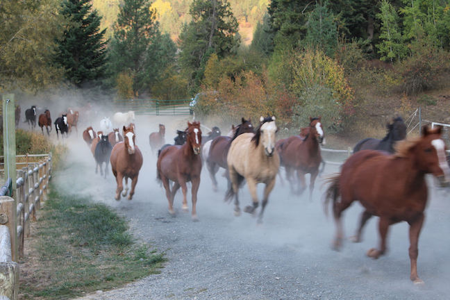 The ranch horses heading in from their pasture. Photo by Anne Joubert
