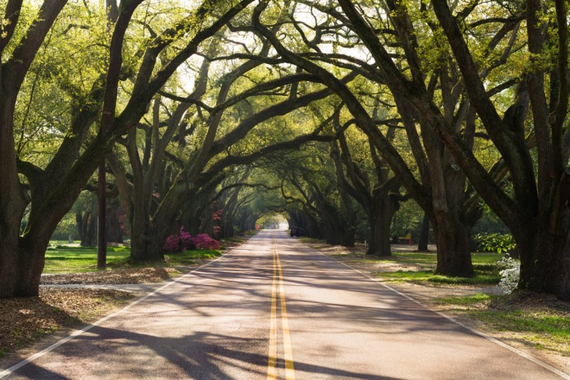 Beautiful tree covered road in Aiken Photo courtesy of VisitAiken, SC