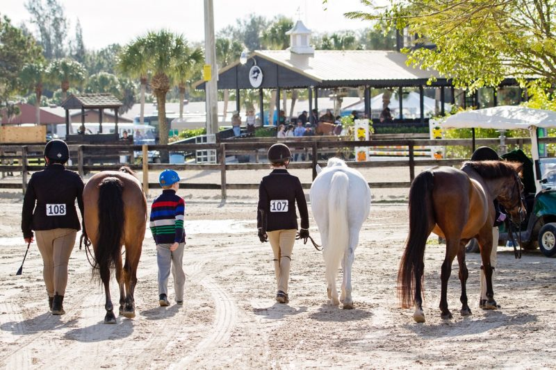 Palm trees and ponies make for a great combination at Fox Lea Farm. Photo by Victoria DeMore