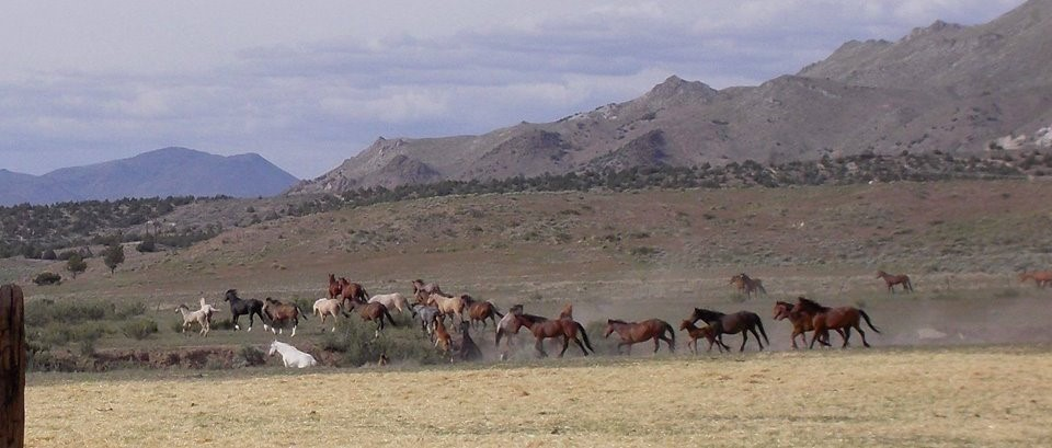 Country Music & Mustangs: An Iconic Pairing of the American West – Lacy J.…