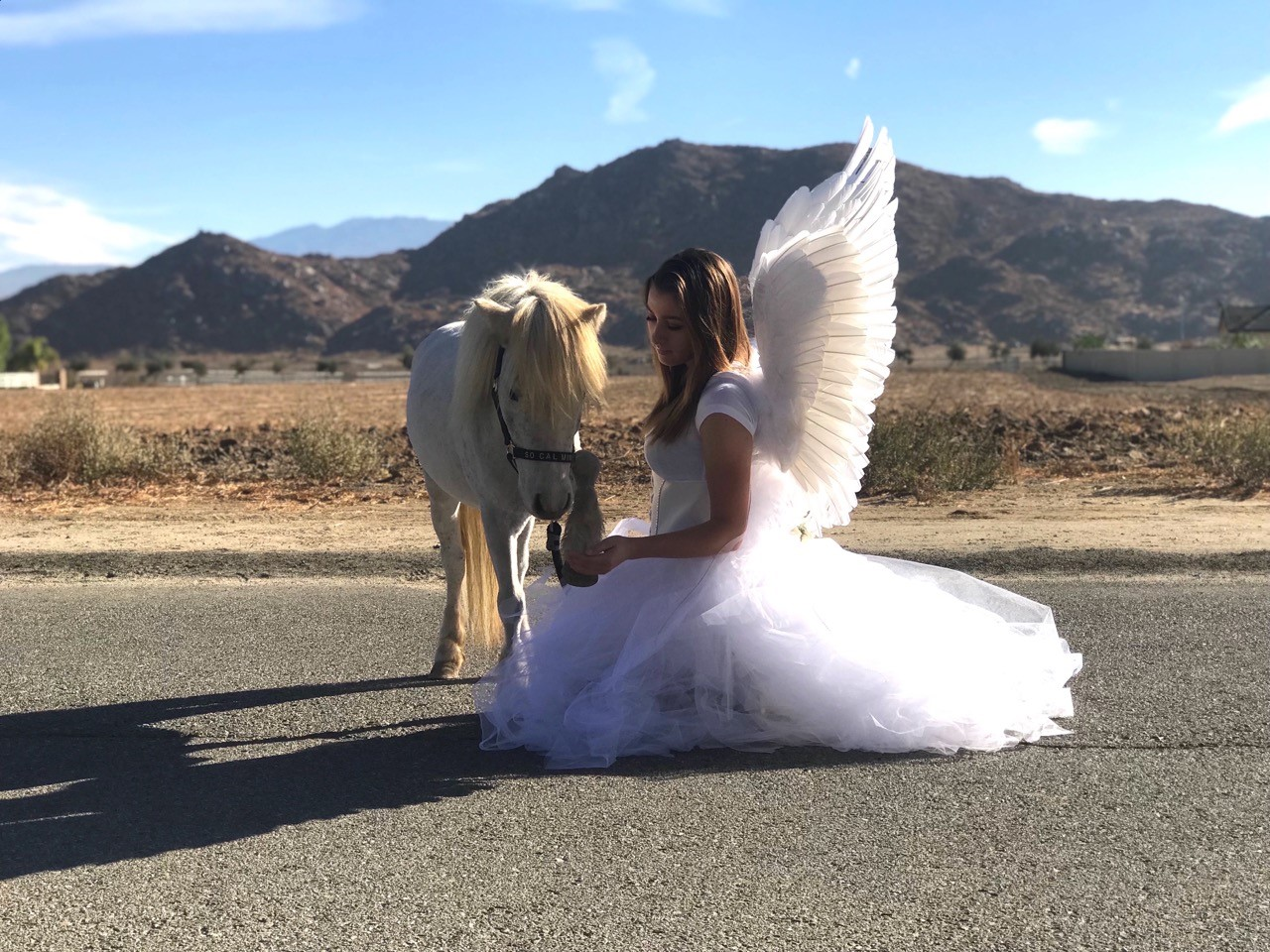 So Cal Mini Horse Rescue Angels At Work Sidelines Magazine