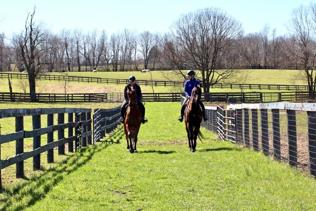 CANTER Kentucky: On the Forefront of Rehoming American Ex-Racehorses