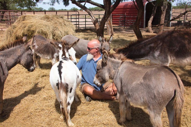 Peaceful Valley Donkey Rescue Stubbornly Advocating For